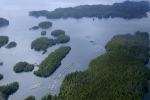 survol Great bear Rainforest 0004 1685